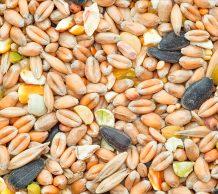 Backrohstoffe - Körner- und Saatenmischung, Flocken und Kräuter direkt vom Hersteller